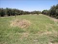 Terreno agricolo Cerignola Via  Trinitapoli