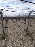 Terreno agricolo Cerignola ZONA LAMIONI