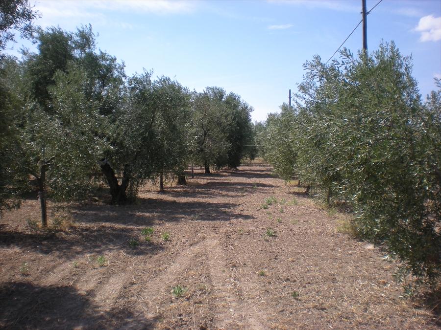 Terreno Edificabile Residenziale in vendita a Cerignola, 9999 locali, prezzo € 300.000 | Cambio Casa.it