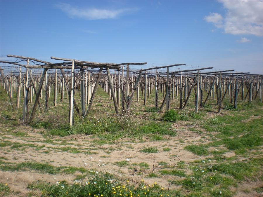 Terreno Edificabile Residenziale in Vendita a Cerignola