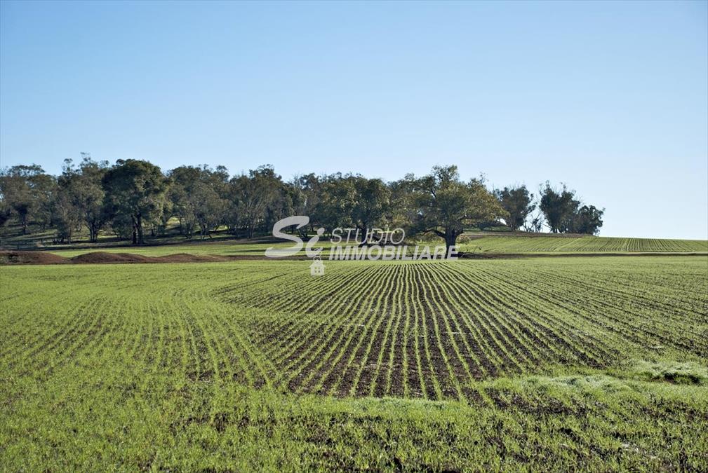 Terreno Agricolo Ruvo di Puglia 173