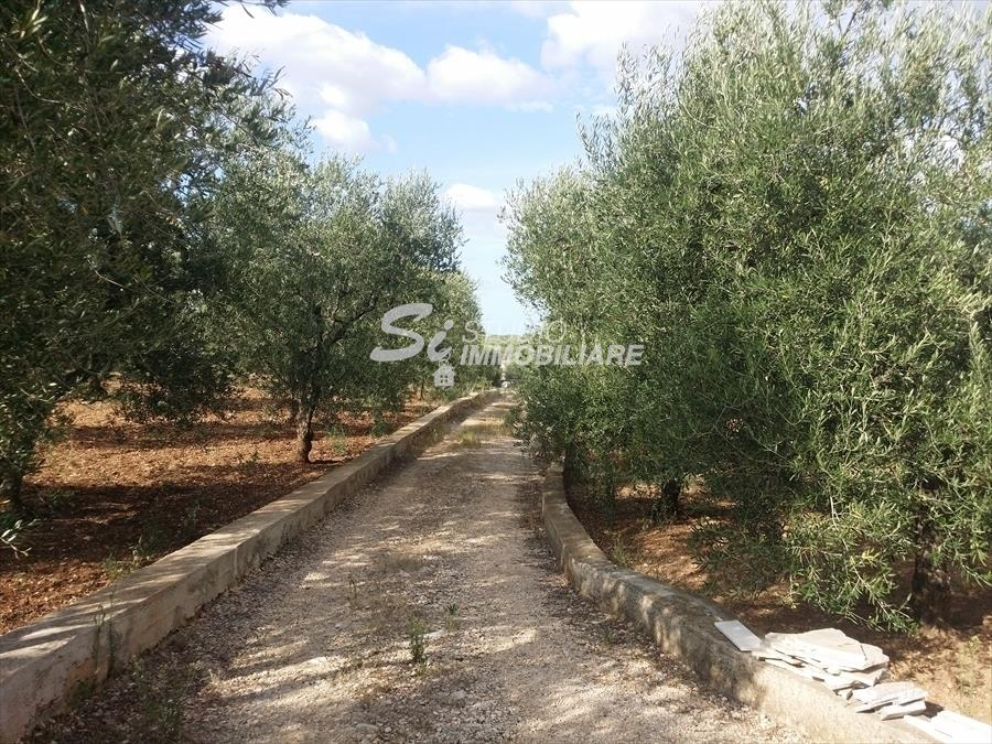 Terreno Agricolo in Vendita Andria