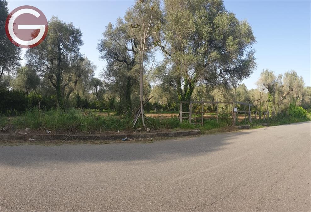 Terreno Agricolo in Vendita Taurianova