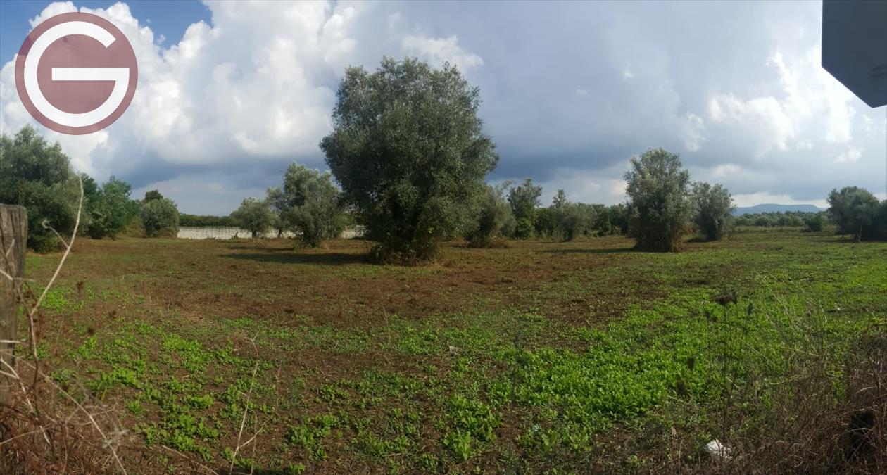 Vendita Terreno Agricolo Taurianova
