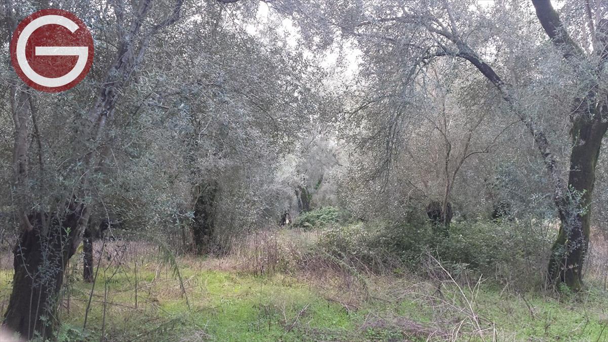 Vendita Terreno Agricolo Cittanova