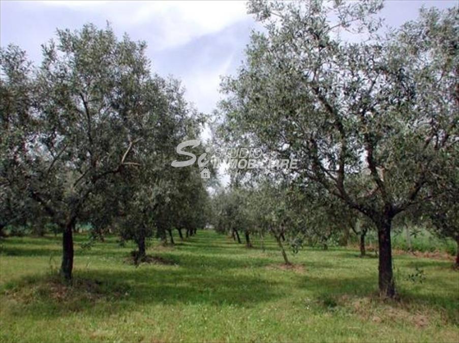 Terreno Agricolo in Vendita Bitonto