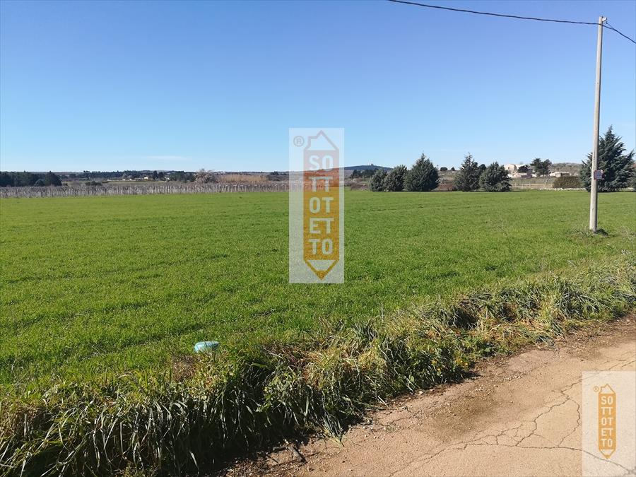 Terreno agricolo Rivoluzione Corato