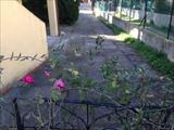 Stagno-Villaggio Emilio
